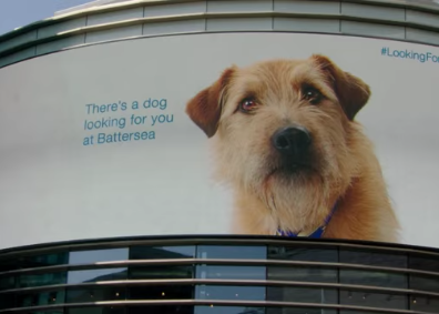 Experiential Marketing for the Doggies