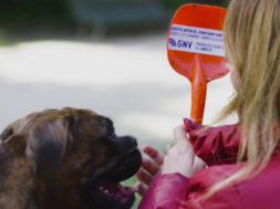 Doggie Ambassadors and Experiential Marketing